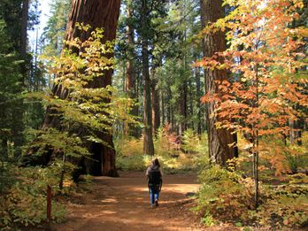 Where to Find Fall Colors in Calaveras and Beyond